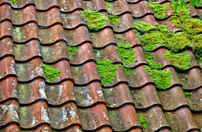 Residential Gutter And Roof Cleaning Oakland Berkeley